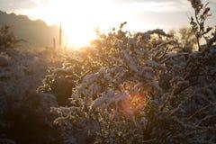 Snöig soluppgång i öknen Arkivbilder
