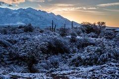 Snöig soluppgång i öknen Royaltyfria Foton