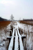 Snöig spång nära till dammet i Januari royaltyfri bild