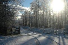 Snöig spår- och björkträn Royaltyfri Bild