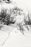 Snöig spåra i den storslagna Teton nationalparken Royaltyfri Fotografi