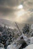 Snöig spruce skog Royaltyfria Bilder