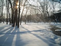 snöig stadspark Royaltyfri Fotografi