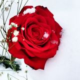 Snöig steg royaltyfri bild