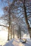 Snöig Sunny Birch Path V Arkivbild