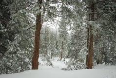 Snöig tillstånd royaltyfria foton