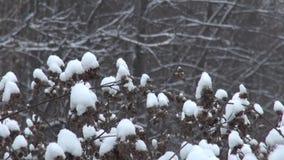 Snöig torr tagg i vinter stock video