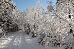 snöig trä arkivfoto