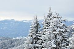 Snöig träd Royaltyfri Bild