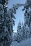 Snöig träd! Royaltyfri Bild