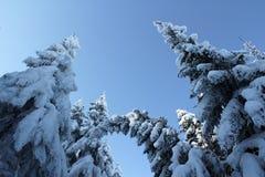 Snöig träd! Arkivbild