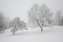 Snöig träd Royaltyfri Fotografi