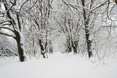 Snöig träd Arkivbilder