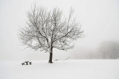 Snöig träd Arkivfoto