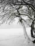 Snöig träd Fotografering för Bildbyråer