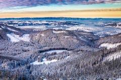 Snöig träd i en bergdal Arkivbild