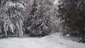 Snöig träd i skogen lager videofilmer