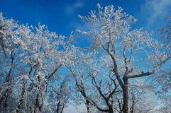 Snöig träd i Slovakien Royaltyfria Foton