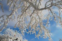 Snöig träd i Slovakien Royaltyfria Bilder