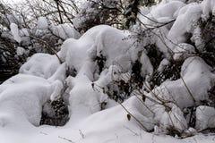 Snöig träd i vinterskog arkivfoton