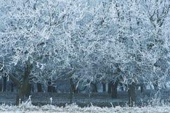 Snöig träd i vinterskog Royaltyfria Foton