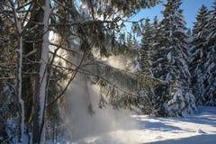 Snöig träd II Fotografering för Bildbyråer