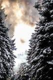 Snöig träd med dramatisk himmel arkivbilder