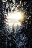 Snöig träd med solnedgång arkivbild