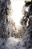 Snöig träd med solnedgång royaltyfria bilder