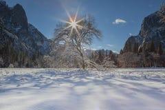 Snöig träd med Starburst i den Yosemite nationalparken Royaltyfri Bild