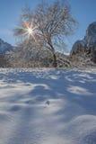 Snöig träd med Starburst i Yosemite Royaltyfria Bilder