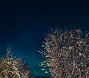Snöig träd mot den nordiska vinterhimlen Royaltyfri Fotografi