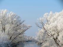 Snöig träd near chanel, Litauen royaltyfria bilder