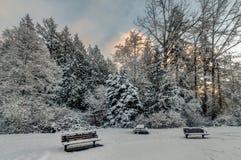 Snöig träd och bänkar Royaltyfri Bild