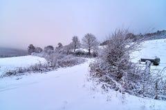 Snöig träd och bana till och med fälten royaltyfri foto