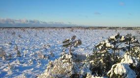 Snöig träd och gräs i ängen i vinter, Litauen royaltyfria bilder