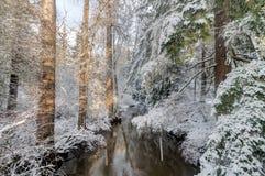 Snöig träd och liten vik Royaltyfri Fotografi