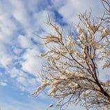 Snöig träd på blå himmel med vit molnbakgrund royaltyfri foto