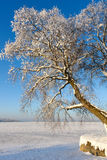 Snöig träd på djupfryst sjö I Arkivfoton