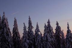 Snöig träd på solnedgången! Royaltyfri Foto