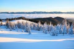 Snöig träd står på gräsmattan under solen De höga bergen täckas med snö En härlig vinterdag arkivbild
