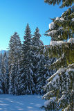 Snöig träd VII Arkivfoton