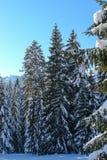 Snöig träd VIII Arkivbild