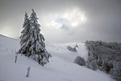 Snöig träd, vinter i Vosgesna, Frankrike Arkivfoto