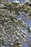 Snöig trädfilial Arkivbilder