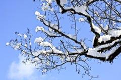 Snöig trädfilial Arkivbild