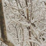 Snöig trädfilialer arkivbild