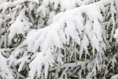 Snöig trädfilialer i skog i vinter royaltyfri bild