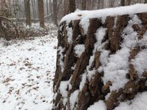 Snöig trädstubbe i träna Royaltyfri Foto