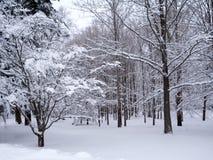 snöig trän Fotografering för Bildbyråer